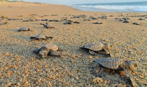 sea-turtles-baja