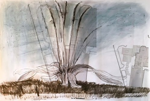 09+Muszynski+Rooted+Series+Plantago